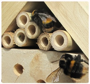Make some bumblebee homes